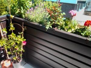 Balkon Bepflanzung