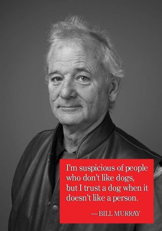 Bill Murray Hundemensch